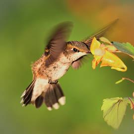 Golden Bird Inhaling by Wei Tang