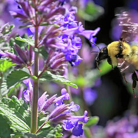 Golden Bumble in the Catnip by Donna Kennedy
