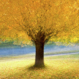 Golden canopy by Alan Brown