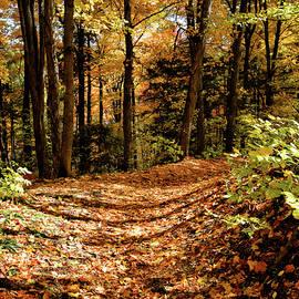 Golden Carpet of Fall by Maria Keady