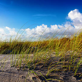 Golden Dune Grasses by Debra and Dave Vanderlaan