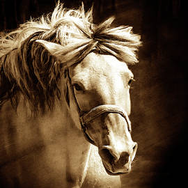 Golden Flowing Mane  by Jerry Cowart