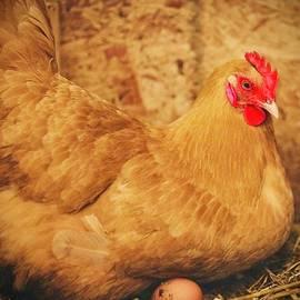 Golden Hen by KaFra Art