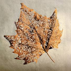 Golden Hour Leaf Lace by Catherine Randolph Hamilton