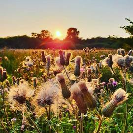 Golden Hour Wildflowers by Andrea Whitaker