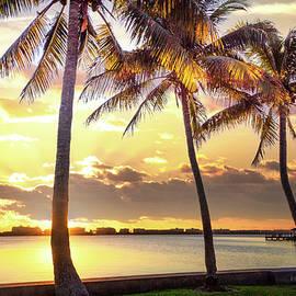 Golden Light in the Palms by Debra and Dave Vanderlaan