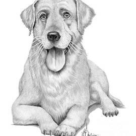 Golden Retriever drawing by Murphy Art Elliott