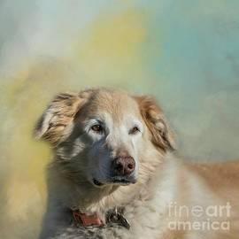 Golden Retriever Portrait by Eva Lechner