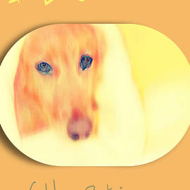 Golden  Retriever Posters 3  by Miss Pet Sitter