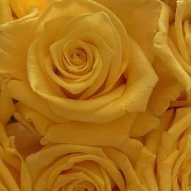 Golden Rose by Inez Ellen Titchenal