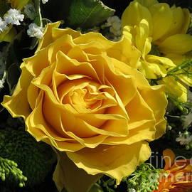 Golden Rose by Kathryn Jones