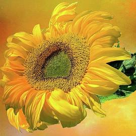 Golden Sunflower by Christina Ford