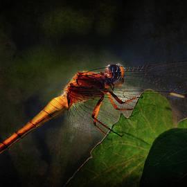 Golden Translucent Dragonfly by Siene Browne