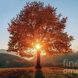 Golden tree by Julia Bernardes