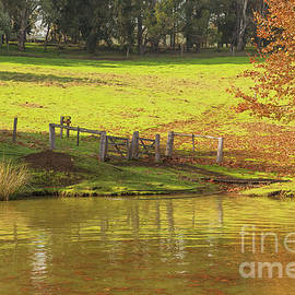 Golden Valley Tree Park, Balingup, Western Australia #8 by Elaine Teague