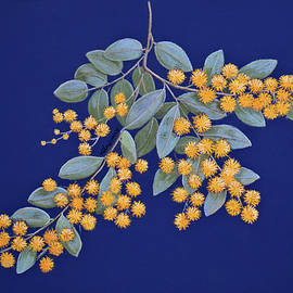 Golden Wattle - Pastel painting by Alison A Murphy