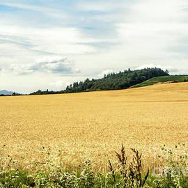 Golden Wheat by Beautiful Oregon