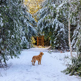 Golden Winter Day by Elizabeth Dow