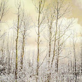 Golden Winter Forest by Hal Halli