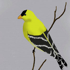Goldfinch by William Moore