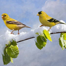 Goldfinches after Spring Snowfall by Spadecaller