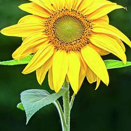 Good Morning Sunshine by Marcia Colelli