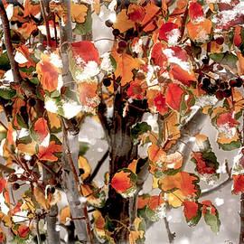 Goodbye Autumn by Donna Kennedy
