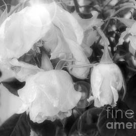 Goodbye Roses by Deni Kidwell