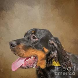 Gordon Setter Portrait by Eva Lechner