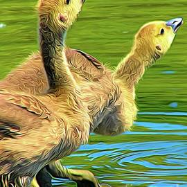 Goslings Testing The Water at  Sinking Ponds East Aurora NY Abstract Expressionism by Rose Santuci-Sofranko