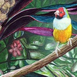 Gouldian Finch by Carol Hanna