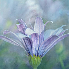 Graceful Daisy by Terry Davis