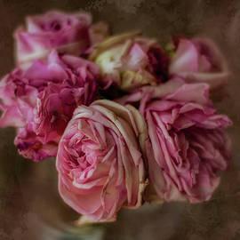 Gradient roses by Rita Di Lalla