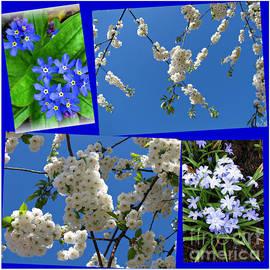 In Celebration of Spring by Kathryn Jones