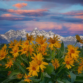 Grand Teton Sunset Flowers by Dan Sproul