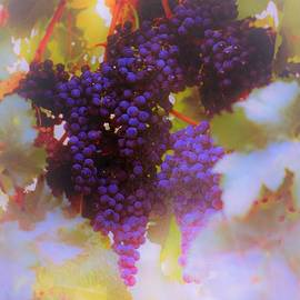 Grapes Hanging From The Vine by Elizabeth Pennington