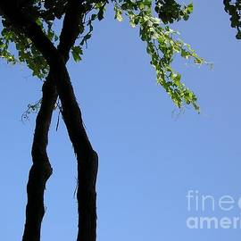 Grapevine silhouetted on blue sky by Paul Boizot