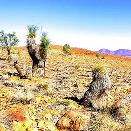 Grass Tree Landscape 3 by Lexa Harpell