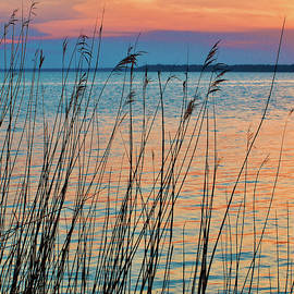Grasses along the Pocosin by Richard Perry