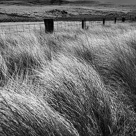 Grasses in the Wind by Heidi Fickinger