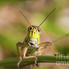 Grasshopper Face by Megan McCarty
