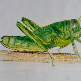 Grasshopper by Tanuja Rangarao
