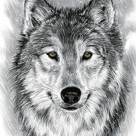 Gray Wolf  by Andrew Read