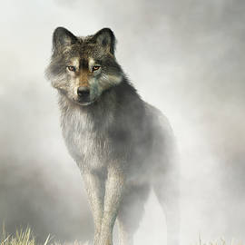 Gray Wolf in Fog by Daniel Eskridge