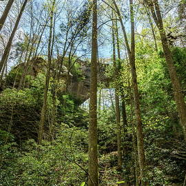 Grays Arch in Red River Gorge by Alexey Stiop