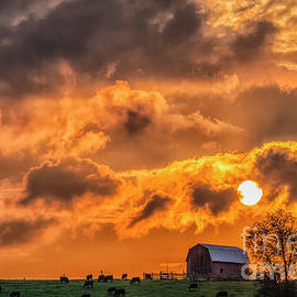 Grazing Cattle Sunset and Barn by Thomas R Fletcher