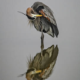 Great Blue Heron Ballet by John Maslowski