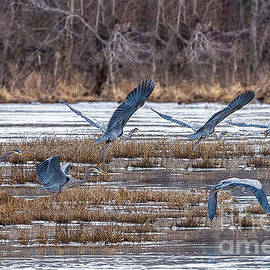 Great Blue Heron Collage by Jennifer White