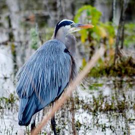 Great Blue Heron by Marie Dudek Brown