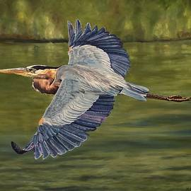 Great Blue Heron by Martha Arnold